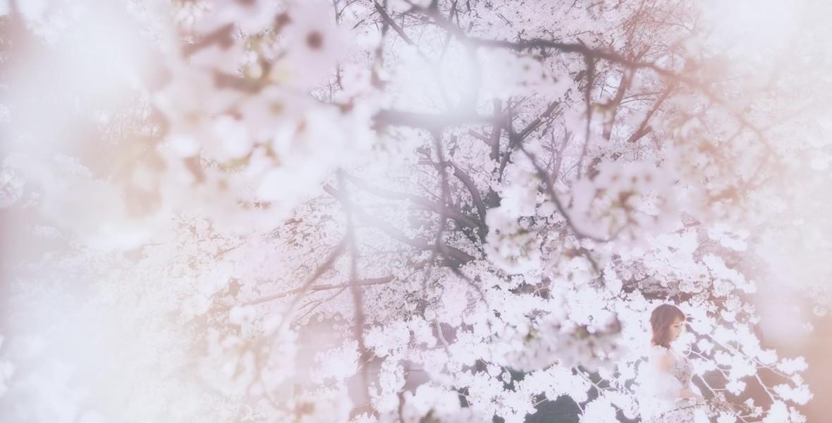 Sakura017