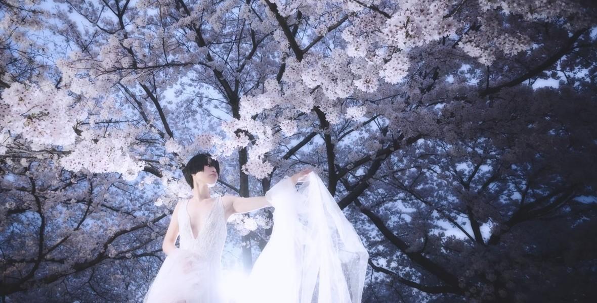 Sakura036