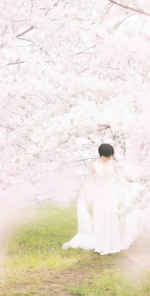 Sakura040